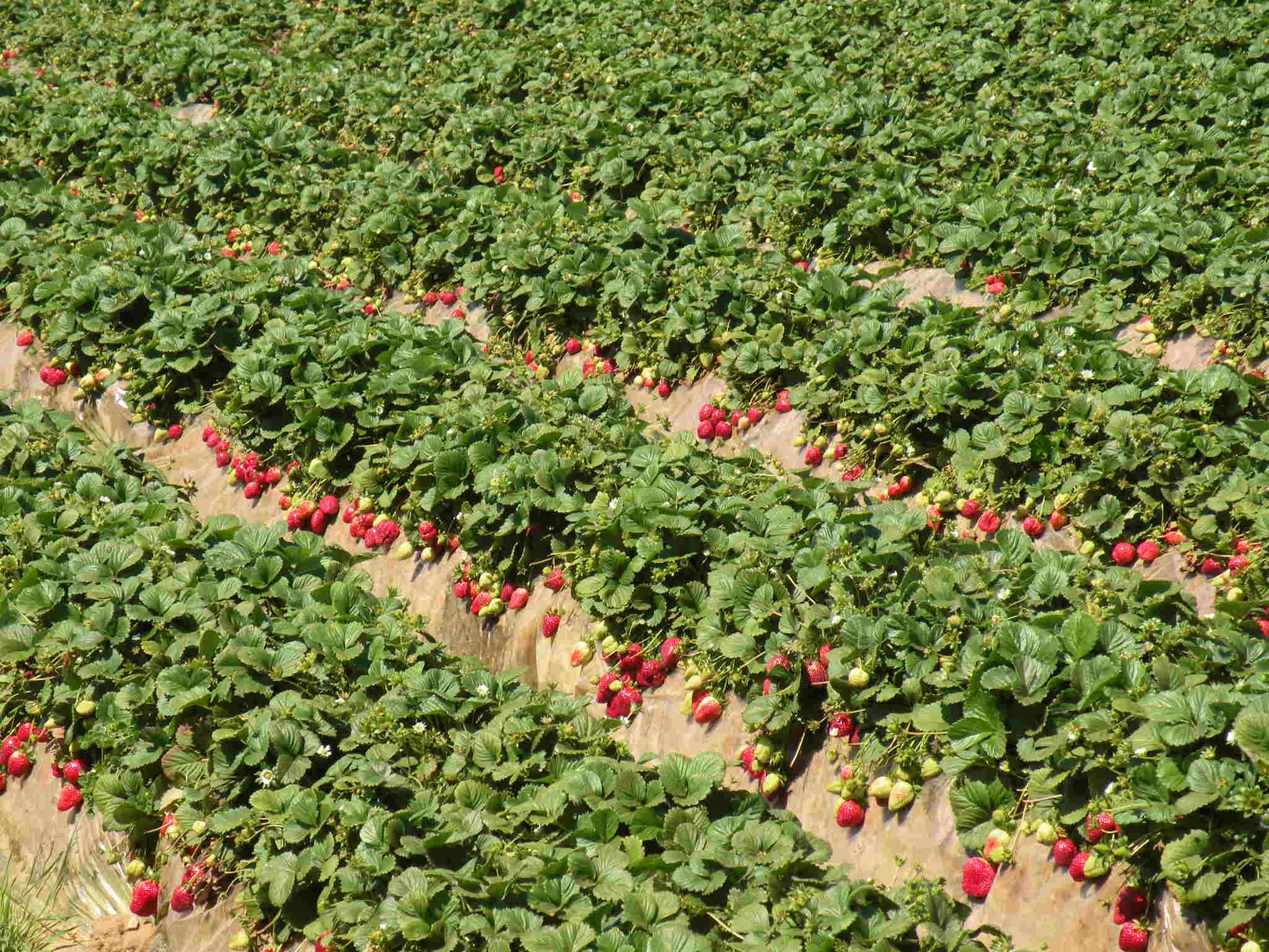 Как подтянуть ягодиц и сделать