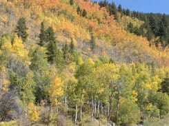 Kebler Pass, Colorado-Fall is Coming