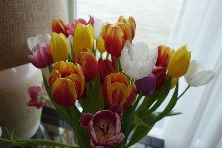 Spring tulip time