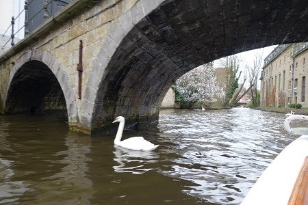 Bruges and swans