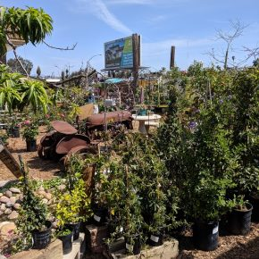 Right in the City, a Family Garden Nursery in San Diego